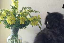 Snaps, Roses, Mint and Floof